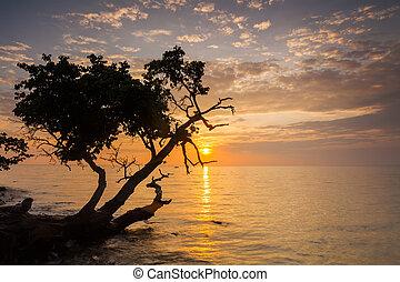 美丽, 日落, 在上, a, 热带, island., koh, chang., thailand.