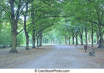 美丽, 树, 绿色, 长凳, 许多, 公园