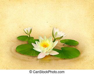 美丽, 水, 植物群, 百合花, 图, 卡片