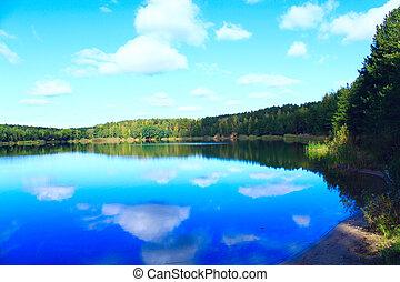 美丽, 湖, 风景, 森林