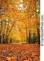 美丽, 秋季, 落下, 发生地点, 森林