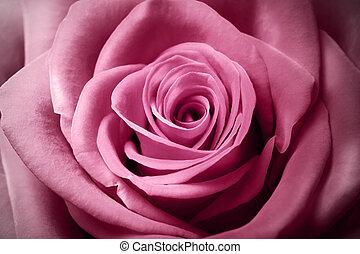 美丽, 粉红升高