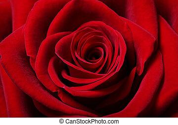美丽, 红升高