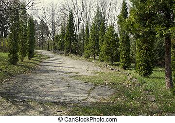 美丽, 绿色的公园, 带, a, walkway.