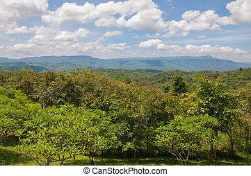 美丽, 绿色的山, 风景, 带, 树