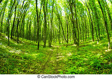美丽, 绿色的森林