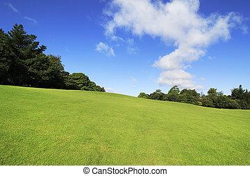 美丽, 绿色的草坪, 在中, 夏天, park.