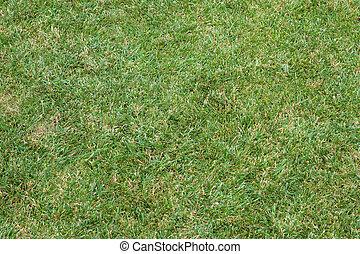美丽, 绿色, 草坪