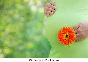 美丽, 肚子, 妇女, 年轻, 怀孕