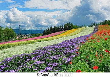 美丽, 花园, 在中, 北海道, japan.