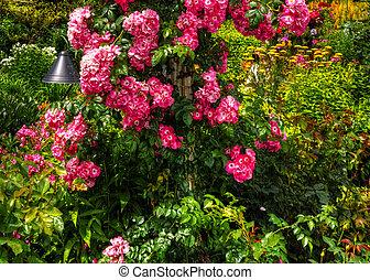 美丽, 花园, 在中, hdr