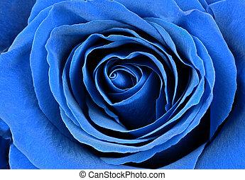美丽, 蓝色, rose.
