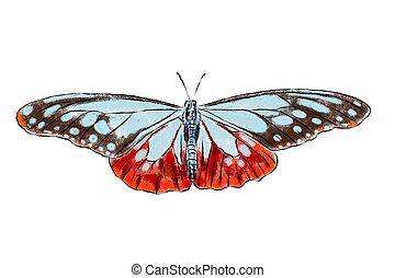 美丽, 蝴蝶, illustration., 现实, collection., 隔离, 手, 背景。, 昆虫, 白色, 图