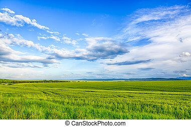 美丽, 风景, 领域, 在中, 小麦, 云, 同时,, mountain., hdr, 形象