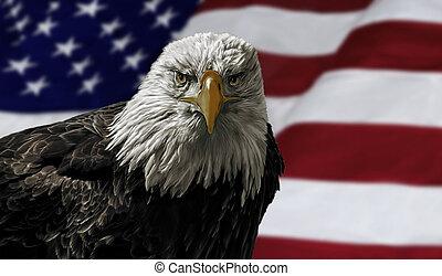 美國人, 禿的鷹, 上, 旗