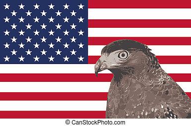 美國旗, 背景, 由于, 鷹