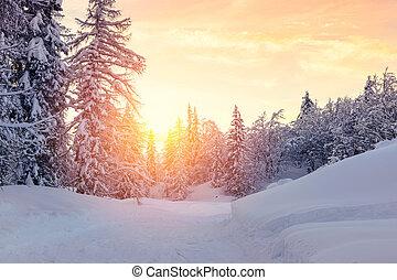 美麗, 傍晚, 在, 冬天, 森林, jluia, 高山, 在, 斯洛文尼亞