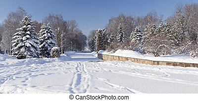 美麗, 冬天風景, 在城市, park., ternopil., 烏克蘭