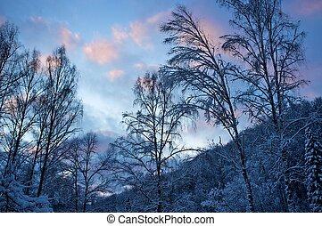 美麗, 冬天, 風景。