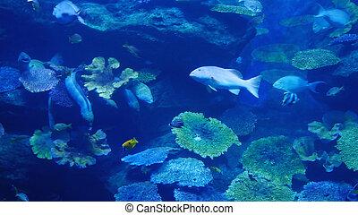 美麗, 外來, 看見, fish, 在, an, aquarium., 水下, 場景