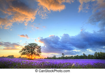 美麗, 大气, 成熟, 震動, 農村, 領域, 圖像, 天空, 淡紫色, 令人頭暈目眩, 傍晚, 英語, 云霧,...