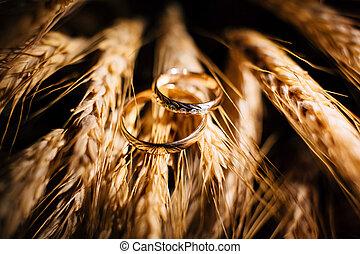 美麗, 射擊, 戒指, 向上, 婚禮, 關閉, 小麥, 耳朵