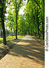 美麗, 很多, 公園, 格林樹