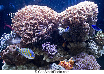 美麗, 珊瑚, 以及, 珊瑚, fish