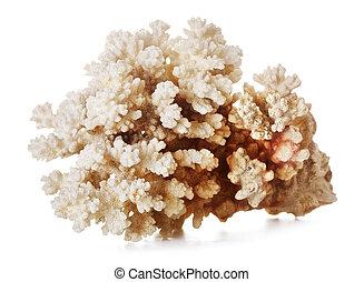 美麗, 珊瑚