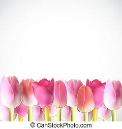 美麗, 粉紅色, 現實, 郁金香, 矢量, 插圖