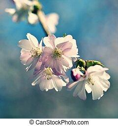美麗, 自然, 花, 太陽, 摘要, 陽光普照, 場景, 春天, 被模糊不清, day., flowers., 樹。, 背景, springtime.
