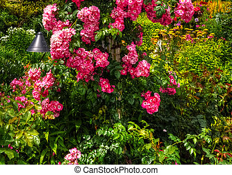 美麗, 花園, 在, hdr