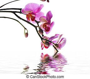 美麗, 蘭花