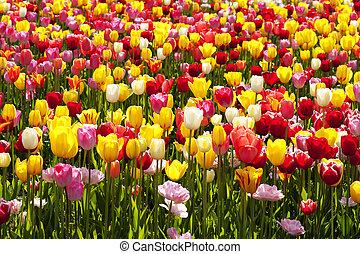美麗, 風景, 在, 南朝鮮, 海灘, 世界, 花, 博覽會