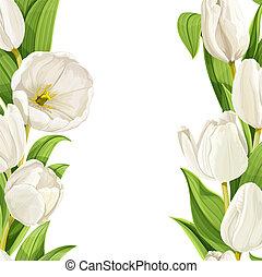 美麗, 鬱金香, 白色, 背景, 現實