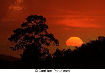 美麗, 黑色半面畫像, 圖像, 樹, 傍晚, 風景