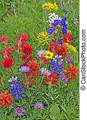群がりなさい, 野生の花, 牧草地