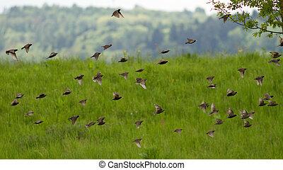 群れ, 鳥