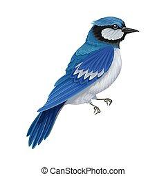 羽, beaked, イラスト, 脊椎動物, あご, 温血, ∥あるいは∥, 歯のない, カケス, 青, aves, ...