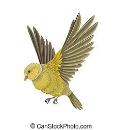 羽, beaked, イラスト, 脊椎動物, あご, 温血, ∥あるいは∥, 歯のない, 鳥, aves, ベクトル