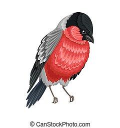 羽, beaked, イラスト, 脊椎動物, あご, 温血, bullfinch, ∥あるいは∥, 歯のない, aves...