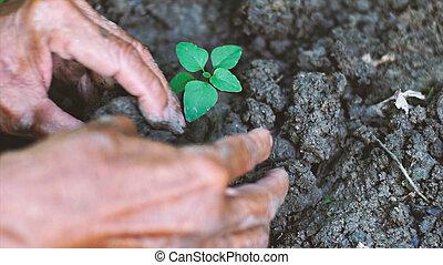 老人, 植えつけ, a, わずかしか, 木, 中に, ∥, garden., エコロジー, 概念