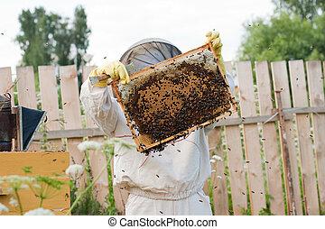 老闆, 工作, 蜜蜂