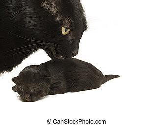 老, 她, 貓, 參加, 五, 母親, kitten., 天