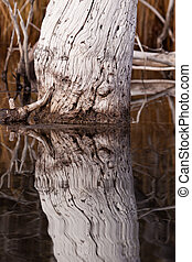 老, 度过, 树, 水, 反映, 表面, 平静