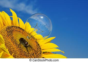 老, 燈泡, 以及, 向日葵