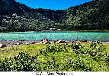 老, volcano's, 火山口, 現在, 綠松石, 湖, alegria, 薩爾瓦多