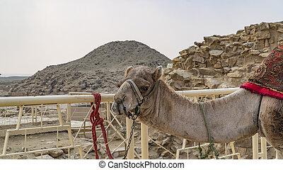 考古学的, ピラミッド, 都市, ステップ, ∥あるいは∥, djoser, remain, necropolis, ...