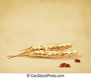 耳朵, 矢量, wheat., illustration.