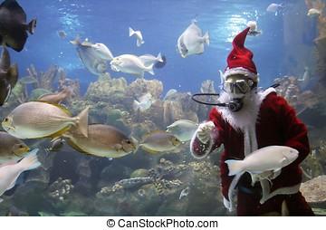 聖誕老人, 喂, 魚